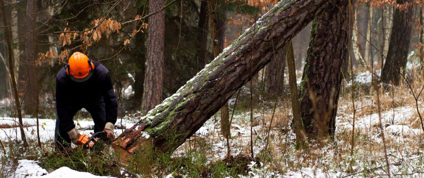 Czym należy się sugerować przy wyborze drzewołazów?